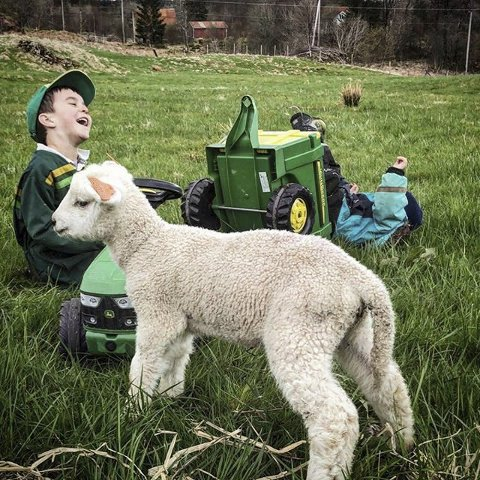 1. GØY PÅ LANDET: Moro, sjølv om det er travelt med lamming både natt og dag. Foto: Julie Bruvoll