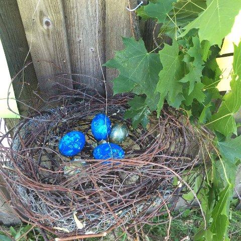 I REIRET: Var det i slike egg Kråka Knas lå før han ble født?