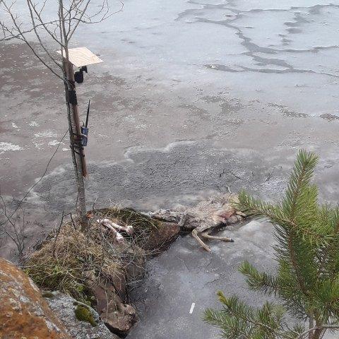 Et dyrekadaver ble denne uka funnet i vannkilden til drikkevannet i Tyssedal.  Kommunen har anmeldt forholdet som de mener er et brudd på drikkevannsforskriften.