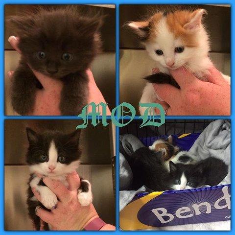 DUMPET I SØPLA: Disse tre kattungene ble funnet dumpet i en søppelsekk i Melløsparken fredag morgen. Nå ønsker Dyrebeskyttelsen tips fra folk som kan ha sett hvem som gjorde det.
