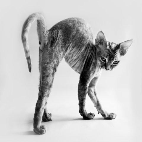 Dyreliv: Liv Johanne Helin tok 1. plass med dette bildet i kategorien papirbilder under temaet dyreliv.