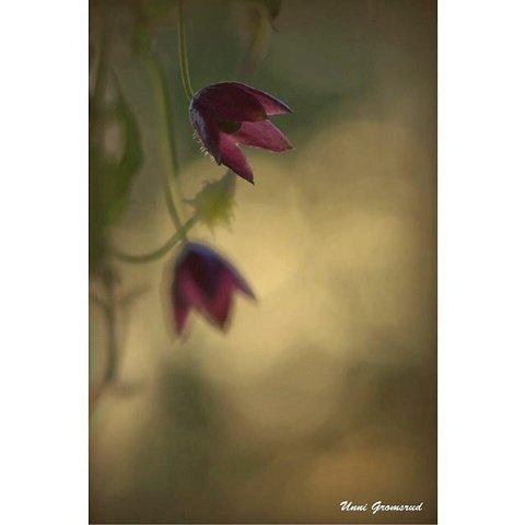Månedens vinner for juni og ukesvinner 26 Unni Gromsrud, har tatt et vakkert makrobilde av blomsten «blodbeger». Den mørkerosa blomsten mot det varme gule kveldslyset gir en fin ro i bildet. Bra!  2 Ukesvinner 22: Her har fotografen fanget et flott uttrykk av gutten i som ligger i hengekøya. I tillegg gir det varme lyset en fin steming. FOTO: HENRIETTE HAGA. 3 Ukesvinner 23: Rolf Støa er blitt en gjenganger i fotokonkurransen vår. Bildet av skogen er rett og slett vakkert. 4 Ukesvinner 24: Et stemningsfullt og et annerledes bilde av to ballettjenter. Veldig bra. FOTO: KARIANNE MOE TØRUM  5 ukesvinner 25: Gutten som sykler gir bildet en fin ro. FOTO: KAI R. NORDBY  6 Unni Gromsrud.