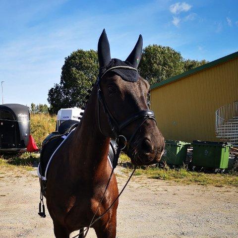 ETTERLYST: Kari Anne Bye etterlyser denne hesten mandag kveld.