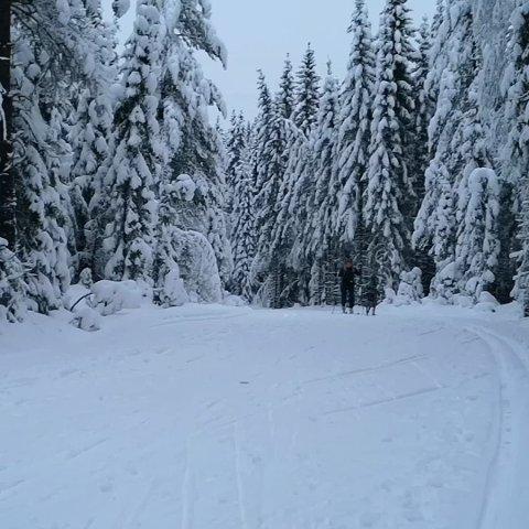 VENTES SNØ: Meteorologisk institutt melder om perioder med snø i noen områder på Østlandet i løpet av mandag.
