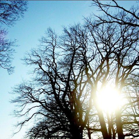 FINT: Det vil bli noen solglimt utover uken, skal vi tro meteorologen.