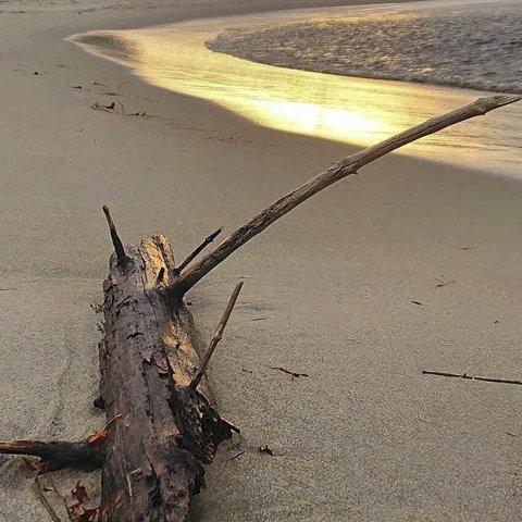 Høst: Mona Windvik har tatt et fint bilde på stranden.