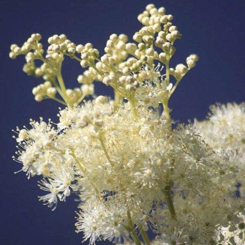 MACRO: Heidi S. Larsen har gått tett på blomster.