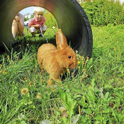 LUFTETUR: Instagrambrukeren Maksmekker har tatt et flott motiv av luftetur med kaninen. Maxmekker er ukens vinner.
