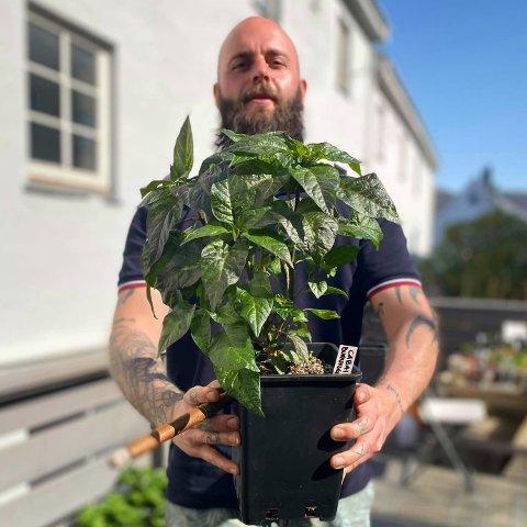 DYRKAR: Anders Hauge (36) frå Lærdal dyrkar over 100 sortar chili både i drivhus og ymse andre plassar i Bergen.