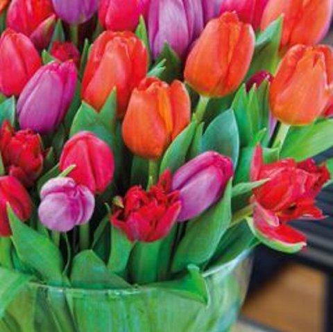 Aksjon: Lørdag har Lions-klubbene i Valdres tulipanaksjon.