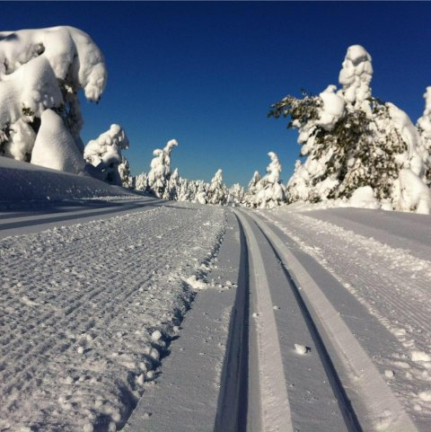 VESTMARKA: Det er ikke nødvendig å dra til fjells for å få skiføre denne helga.