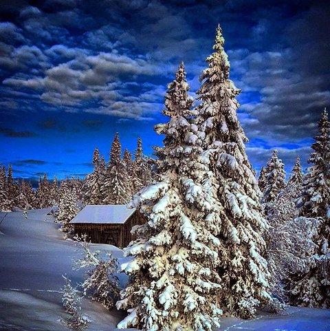 3. VINTERIDYLL: Flott med snø i trærne. Foto: Unni Sandaker