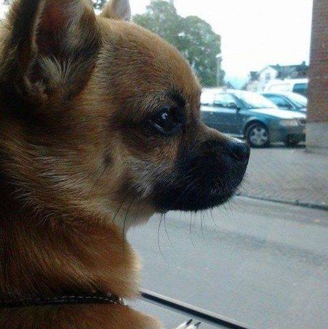 Milo har vært savnet siden fredag ettermiddag.