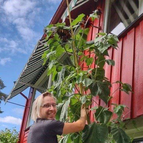 Jørgen Fjeld Nordby og solsikken hjemme i østbyfaret.