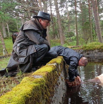 HOVUDET OVER VATNET: Ole-Ivar Åm Sognnes (med hatt) og Siv Fristad hjelper kviga å halde hovudet over vatnet ved hjelp av lassoen til Sognnes.