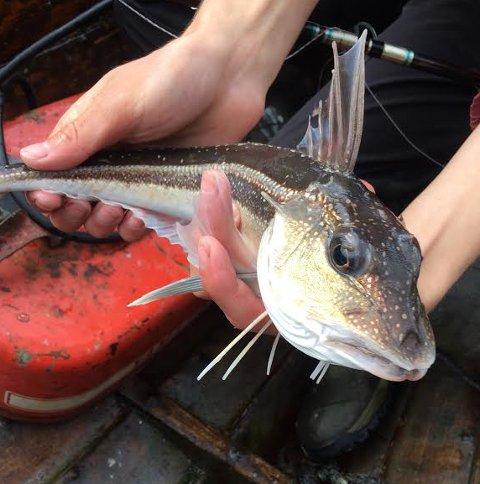 Denne fisken ble tatt på stang i Sørskjomen lørdag. Men hva er det?