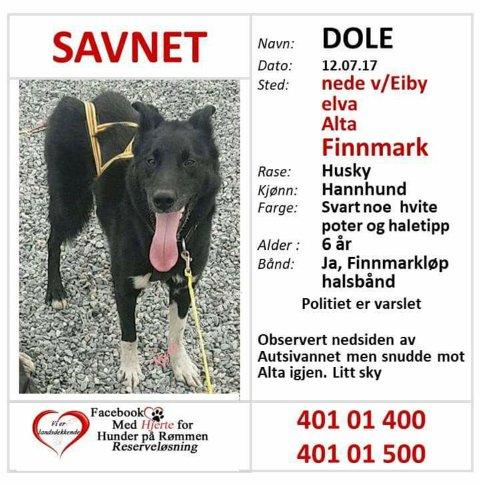 «Dole» er også meldt savnet gjennom aksjonsgruppa «Med Hjerte For Hunder på Rømmen».