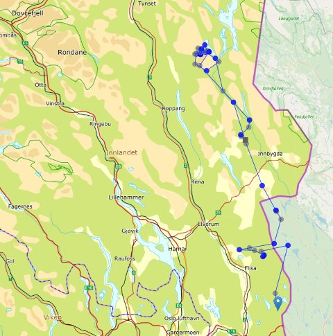 Kartet viser den merkede ulven sine forflytninger i perioden fra 15. januar til 1. mars 2020, med en posisjon per dag. (Kart: Miljødirektoratet.)