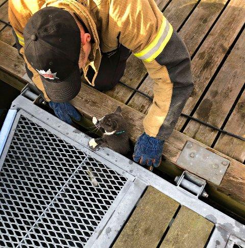 REDDET: En hvit og grå katt hadde forvillet seg under en flytebrygge i havna til Teie båtforening.