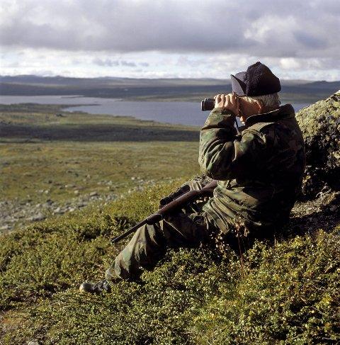 Reinjegar sit på post på Hardangervidda.