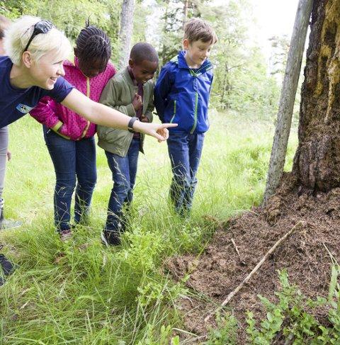 KRYP: Kristine Sibbern viser Miriam Kamara, Khalid Mohammed og Aksel Berg-Fliss hvordan maurene har flyttet inn i hele trestokken. Ungene er litt avmålte, og får erfare at maur kryper raskt opp på skoene.