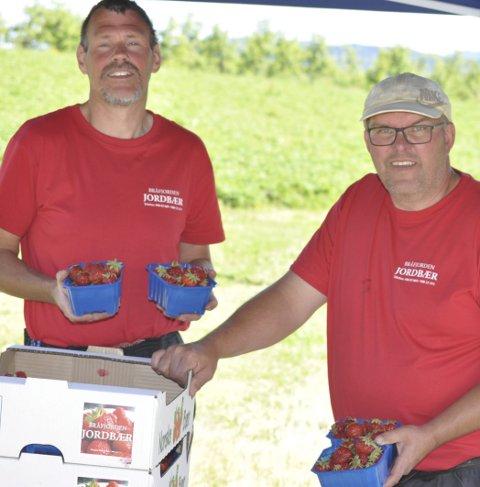 Entusiastiske: Rollef Flathus og Eivind Klevar har satset frisk som jordbærdyrkere til tross for at mange etablerte har lagt ned sin produksjon.