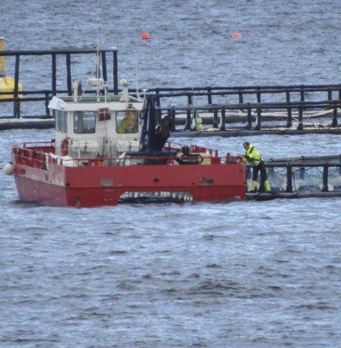 Miljødirektoratet opprettholder Fylkesmannens vedtak om å gi Ballangen sjømat en tidsavgrenset tillatelse til å øke mengde oppdrettslags i Pundsvik.