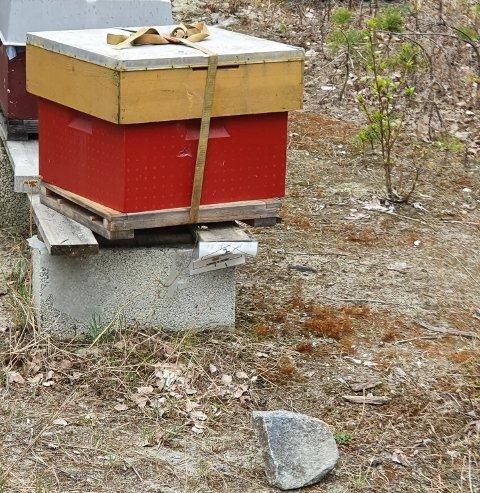 STEIN MOT BIKUBE: Her ligger en stein som er kastet mot en av bikubene, som står skjevt etter å ha blitt truffet.
