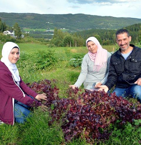 Har produsert: Desse tre syrarane, som i desse dagar flytter frå Fagernes til leira, viser stolt fram salaten dei har dyrka fram F.v. Hanin Aljalkh, Mohamad Aljalkh og Iman Salom.