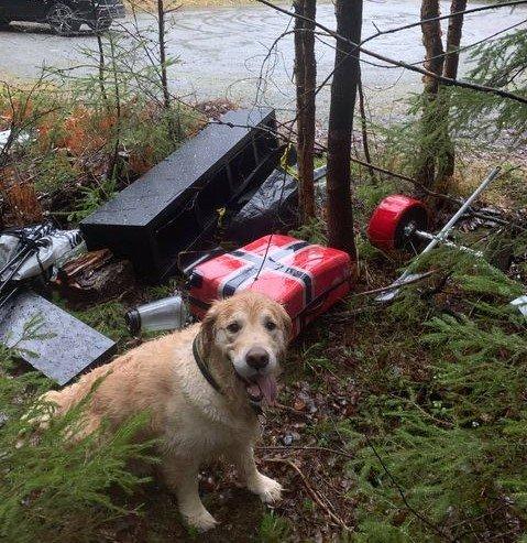SPORHUND?: Hunden Bazzo vet godt at disse tingene ikke hører til i naturen.
