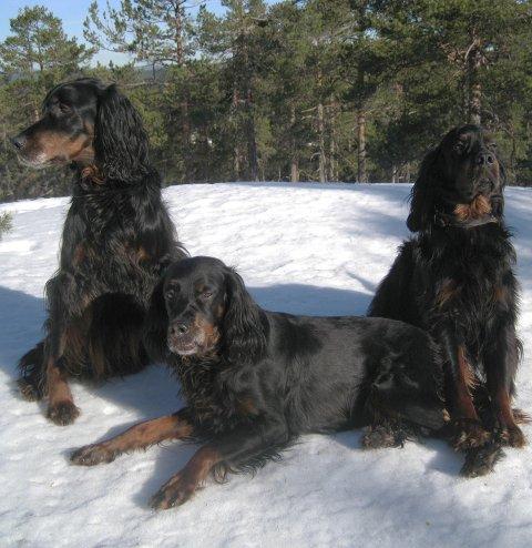 BÅNDLAGT: Hunder i Ski må gå i bånd, med virkning fra tirsdag.