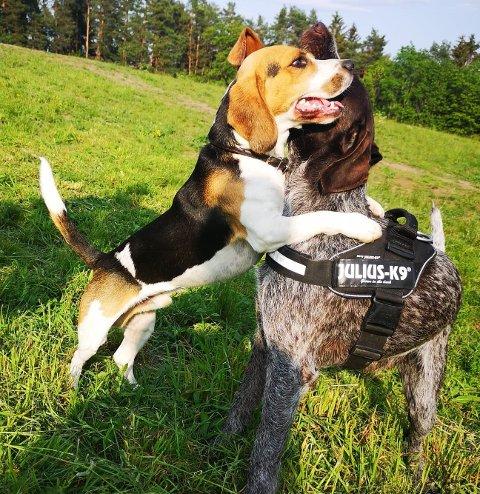 PARKLEK:  Det kan forsatt  la hunden din leke  eller løpe fritt, men da i inngjerdede områder som hundeparken i Vollen.