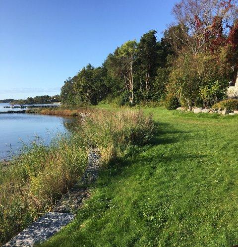 Turistforeningen i Larvik og Omegn kjenner seg ikke igjen i synspunkter fra grunneierne, og mener Per Manvik er med på å polarisere debatten om ny kyststi i Tjølling. Bildet er fra Bjønnesstranda. (Foto: LOT)