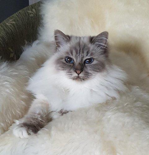 RASEKATT: Katten Frøya ble bare fem år.