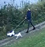 MULIG VITNE: En kvinne med tre små hunder (to hvite og én mørk hund)