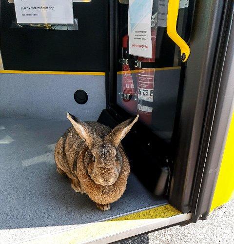 KORT VISITT: - Bussen er sjekket og funnet i orden som befordringsmiddel.