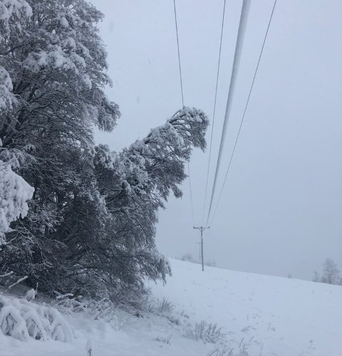 SNØPROBLEMATIKK: Valdres Energi Nett har hatt utfordringer på strømnettet de siste dagene, som følge av snøforholdene som er nå. Her er et eksempel fra mandag, der et snøtynget tre hadde lagt seg på ledningsnettet.