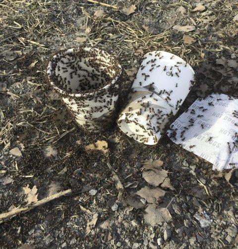 Masse maur koste seg med søpla ved Olimb nylig. Leserfoto