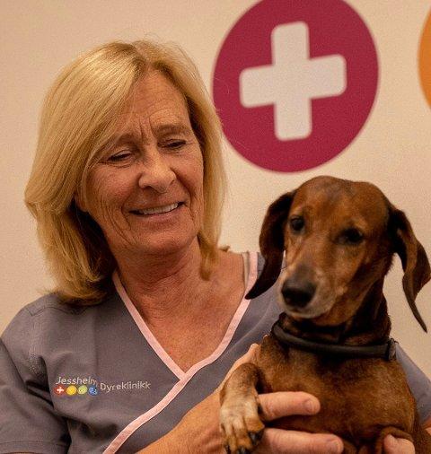 FØLG MED I VARMEN: Veterinær Kristin Lange ber hundeiere unngå å sette igjen hunden i bilen i sommervarmen. Foto: Unni Hjellnes