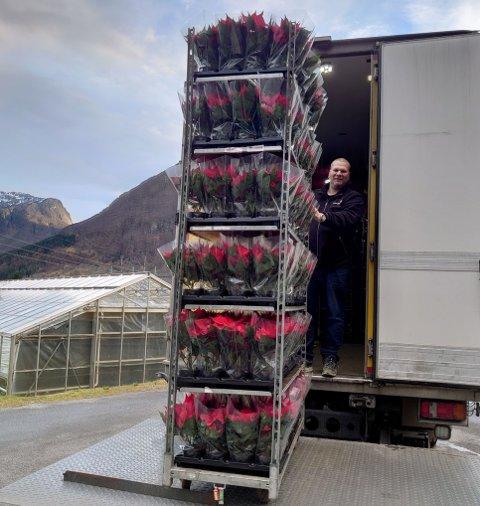 Her tar Arild Vermedal frå Lyssand blomstersalg med seg den siste tralla med julestjerner frå Hageland Fredheim. No er lageret tomt, og dei få stjernene som er att, er bestilt av lokale blomebutikkar.