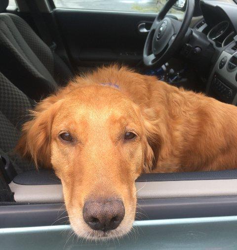 – La aldri en hund være alene i en innelåst bil når solen steker på sommeren.