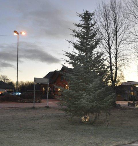 LYS: Søndag ettermiddag tennes julegrana på Leknes etter et fakkeltog fra idrettshallen. Foto: Kai Nikolaisen