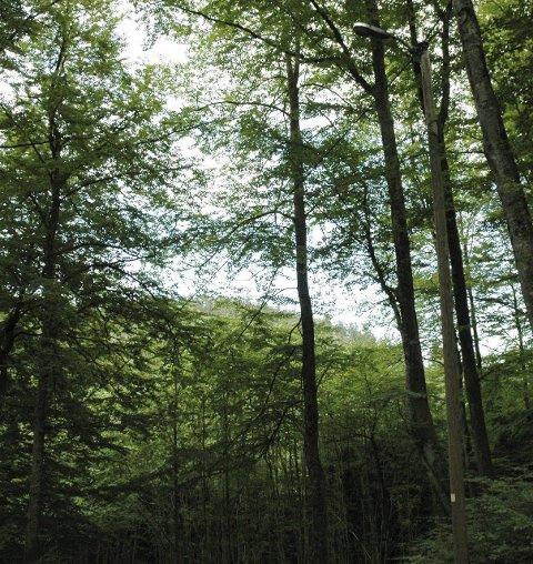 Hjertås: Med et grønt tak over hodet, og små bekker som slanger seg gjennom landskapet, er det ikke vanskelig å skjønne at Hjertås er godt for både hjertet og sinnet. SBLAD FRI 7 til 2005.