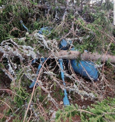 Her ligger det dyre kunstverket under veltede trær.