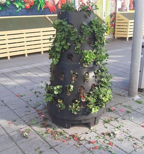 KNEKT: Blomstene var knekt av. Det fikk forbipasserende til å reagere.