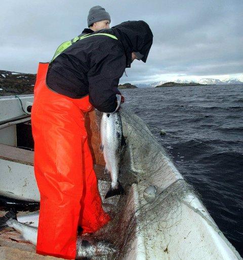 STOPP I TANAFJORDEN: Selv om det blir flertall i Stortinget for krokgarnfiske i Finnmark også i år, rokker det ikke med den vedtatte stopp i alt   sjølaksefiske i Tanafjorden og kystnære strøk.