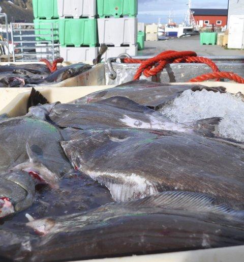 GEBYR:  Flere blåkveitefiskere i Lofoten er blitt ilagt overtredelsesgebyr etter at de gikk lengre ut enn det de hadde lov til. Ill.foto: Kai Nikolaisen