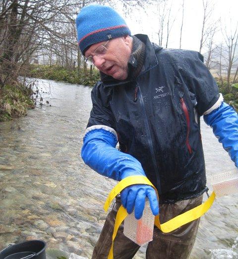 Sven-Helge Pedersen i Genbank Hardangerfjord har den siste tida sett ut rogn i lokale elvar.