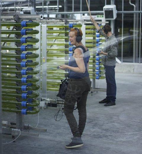 ALGENE: I disse rørene er alger i full gang med å «spise» CO2. Lydkunstner Signe Lidén gjør opptak av lydene fra prosessen. FOTO: Jiska Huizing