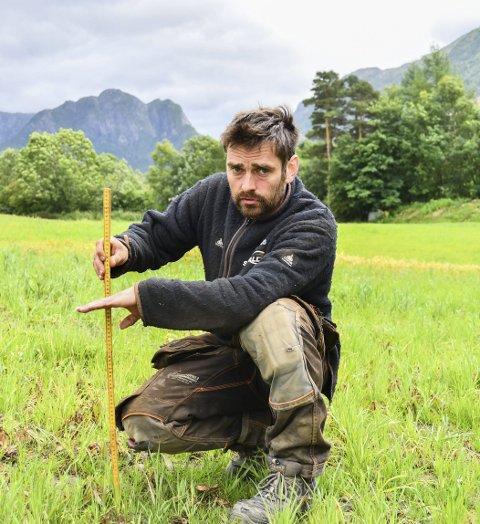 ALTFOR KORT: No skulle graset vore over 50 centimeter høgt, men som Kjetil Mehl viser her, er det ikkje over 10 centimeter.